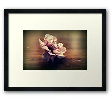 Cherry Blossom On A Table Top Framed Print