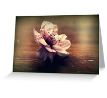 Cherry Blossom On A Table Top Greeting Card