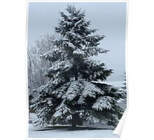 Evergreen In Snow Poster