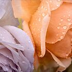 Raindrops on pastel roses by Celeste Mookherjee