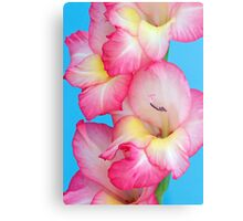 Vibrant Pink Gladiolus Metal Print
