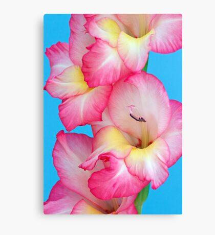 Vibrant Pink Gladiolus Canvas Print