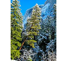 Leaning Tree in Snow- Yosemite National Park Photographic Print