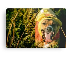 The 50 Acre Wood Metal Print