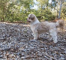 Strike A Pose....Sandy! by mitpjenkeating
