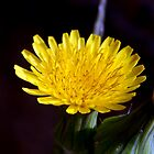 ©NS Tiny Yellow Flower IVA. by OmarHernandez