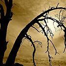 Spooky Trees by Barbara  Brown