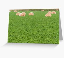 hay in the countryside Greeting Card