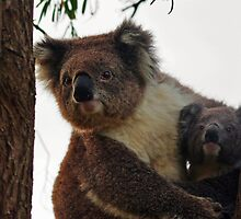 Koala Mum and Bub 3 by hurky