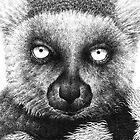 Ring-tailed Lemur Birthday Card by Lorna Mulligan