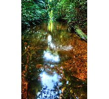 Streaming Light in the Forest Photographic Print