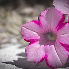 White and Pink Flower by GemaIbarra
