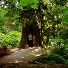 Two Under Tree, Cathedral Grove, 1993 by Priscilla Turner
