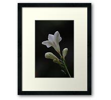 Fresia 0832 Framed Print