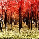 Autumn woods color bicolor digital by borjoz