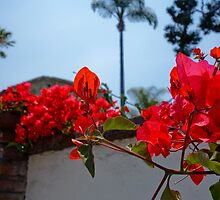 Red Bougainvillea | Mission San Juan Capistrano by Pete Edmunds
