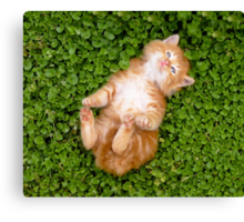 Puppy red cat Canvas Print
