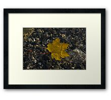 Amber Yellow Sunshine - Maple Leaf and Pebbles Framed Print