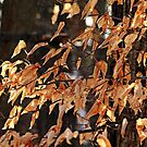 Papery Beech Leaves by Debbie Oppermann