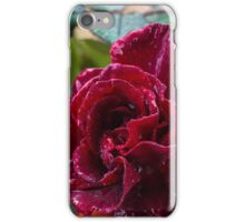An Autumn Rose After The Rain iPhone Case/Skin