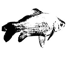 Prussian carp, black and white gold fish Photographic Print