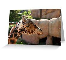 Baringo Giraffe Greeting Card