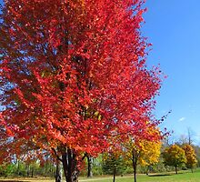 The Red Tree by lorilee