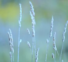 Grasses by Laurie Minor