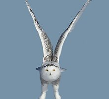 Above me she soars by Heather King