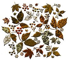 Autumnal Lace Leaves by PrivateVices