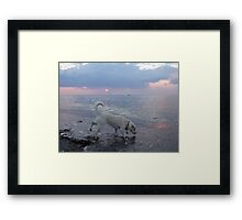 Dog Testing the Waters Framed Print