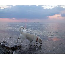 Dog Testing the Waters Photographic Print