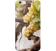 Bunch of white grapes in the vineyard iPhone Case/Skin