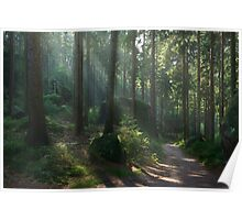 Saxony Forest Poster