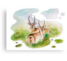 Waterbock Canvas Print