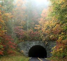 Autumn Tunnel by Asoka