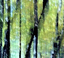 Autumn ~ Sun-dappled trees by Laurie Minor