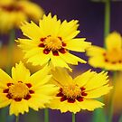 bunch of yellows by ANNABEL   S. ALENTON