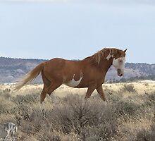 Cowboy by equusferus