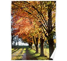 Autumn Lane Near Sundown Poster