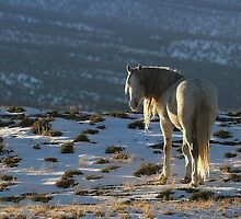 Snowy mountain by equusferus