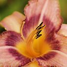 purple lily by ANNABEL   S. ALENTON