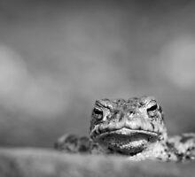 Grumpy Toad (Bufo bufo) Monochrome by cjdolfin
