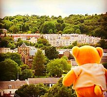 Bear visits Bangor by samandoliver