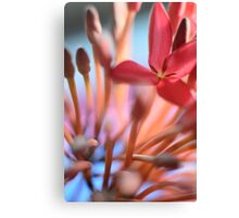 Tropical Flowers Macro Canvas Print