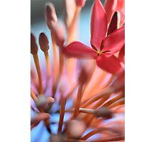 Tropical Flowers Macro Photographic Print