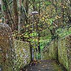 Down Our Lane............ by lynn carter