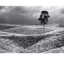 Field of Saddle Road Dreams 2 Photographic Print