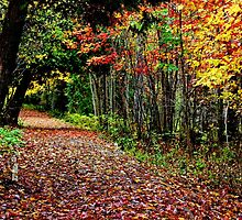 A Leaf Littered Trail by Kathleen Daley