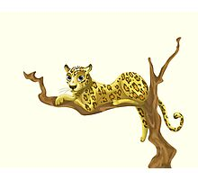 Beautiful leopard resting in tree Photographic Print